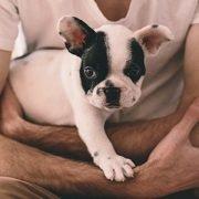 Verhaltensentwicklung von Hunden: Seminar mit Dorit Feddersen-Petersen