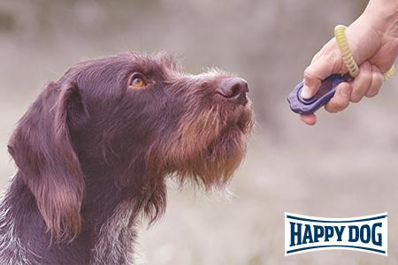 Verstärkersysteme bei Hunden