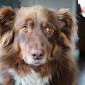 Ängstlicher Hund: Seminar mit Mirjam Cordt über Hunde & Angst