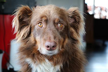 Wenn Hunde Angst haben: ein Seminar mit Mirjam Cordt