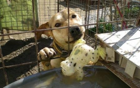 Hund mit Spielzeugspende in seinem Zwinger