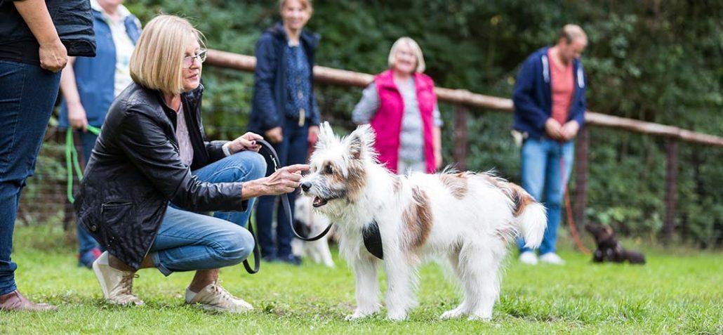 Hundehalterin im Training mit ihrem Hund auf dem trainingsplatz