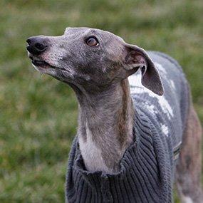 Uschis Blog Hundetrainer werden
