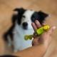 Clicker Hund - Halterin clickt Hund