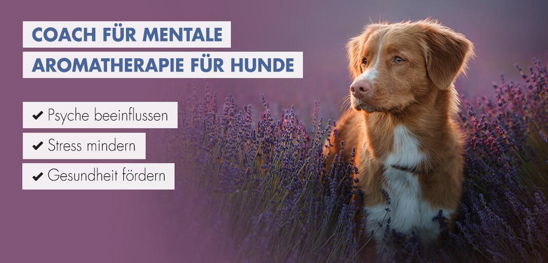 Coach für Mentale Aromatherapie für hunde