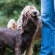 Das eigentliche Training beginnt schon vor dem Training - Welpen spielen auf dem Hundeplatz