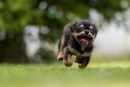 Seminar bei Ziemer & Falke: Der hyperaktive Hund