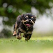 Der hyperaktive Hund: Seminar mit Claudia Kannenberg