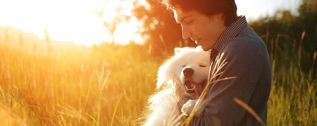 Mann sitzt innig zusammen im Feld bei abendlicher Sonne