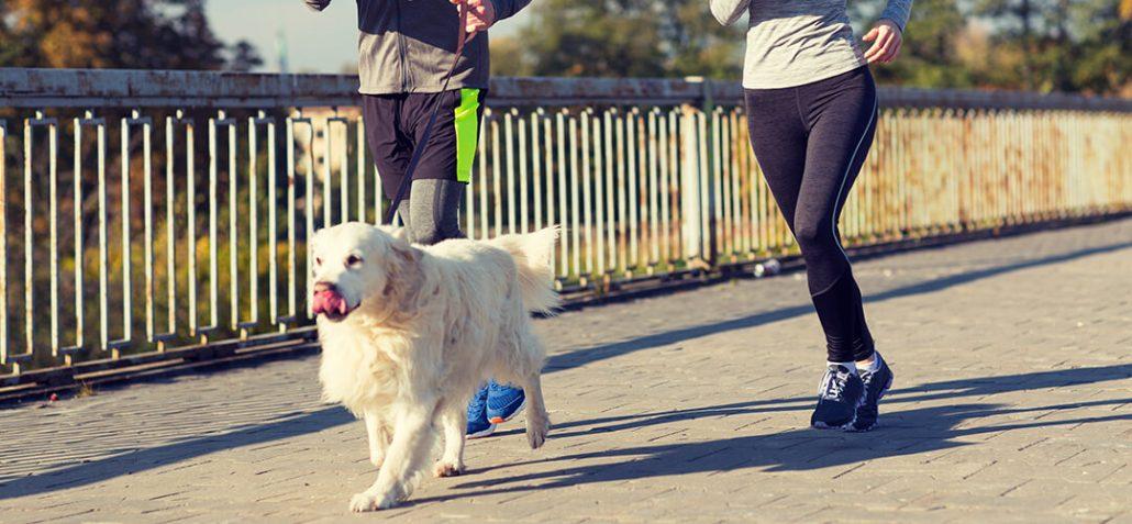 Hund joggt mit Haltern über Brücke