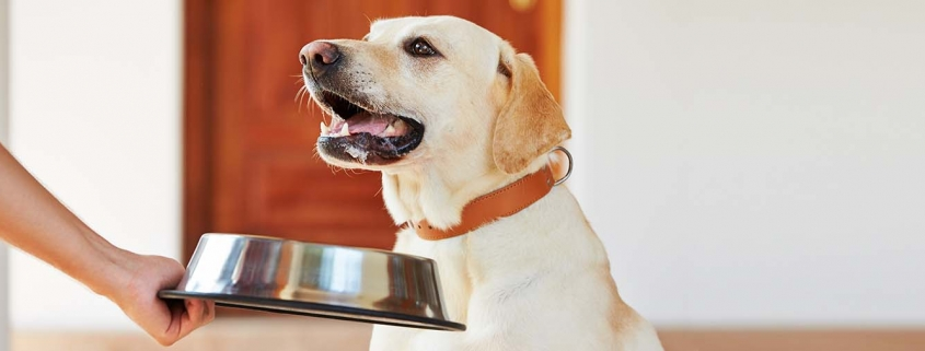 Futteraggression beim Hund - Halterin nimmt Labrador den leeren Napf weg