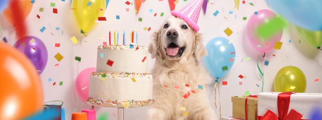 Hund mit Geburtstagstorte
