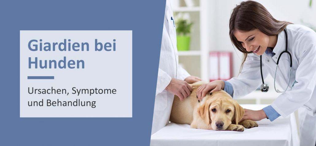 Giardien bei Hunden - Ursache, Symptome und Behandlung