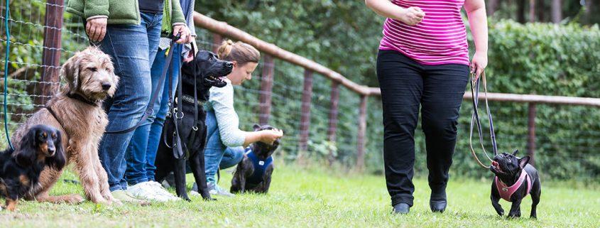 Hundehalterin trainiert mit Hund auf Übungsplatz mit anderen Hundehaltern