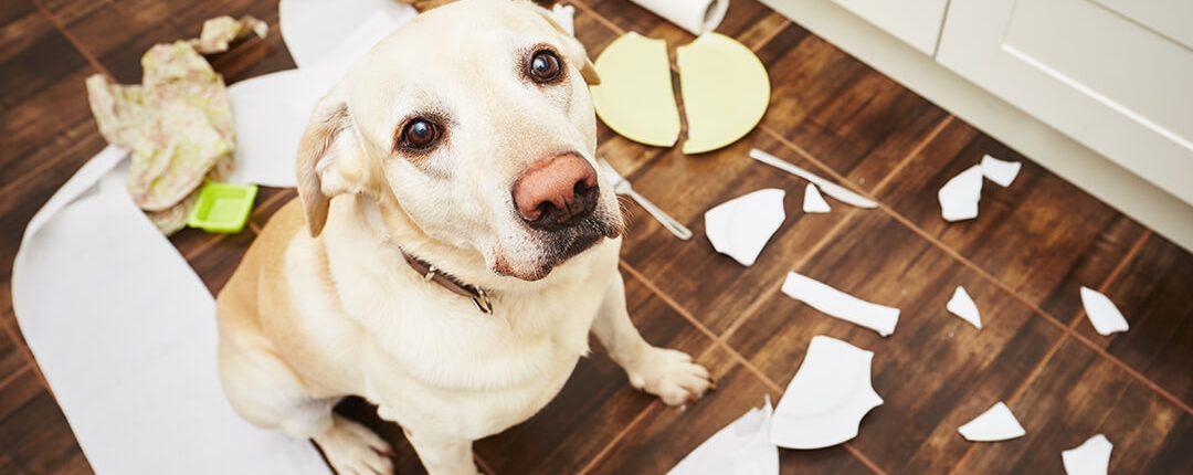 Hund zeigt Beschwichtigungsgesten