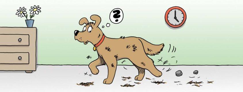 Cartoon eines Hundes, der beim Gehen durch die Wohnung Haare verliert