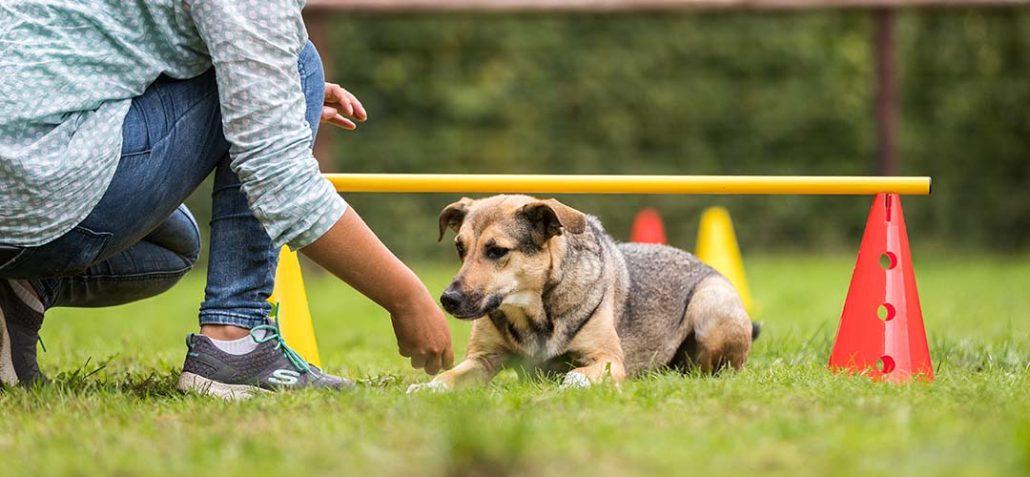 Halterin trainiert mit ihrem Hund auf Übungsplatz