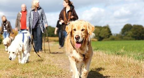 Teaserbild Hundetrainerausbildung