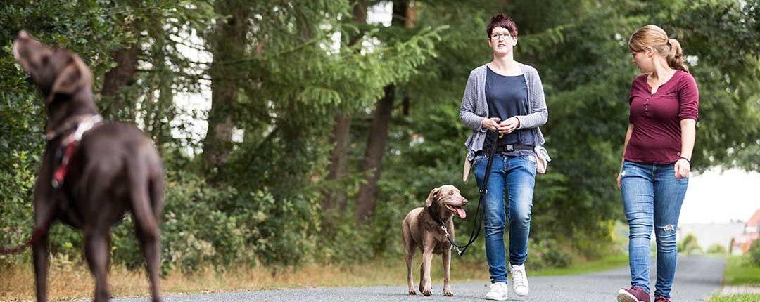 Hundetrainer im Training mit Kunden