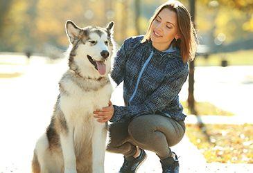 Hundetrainer plus Ausbildung