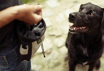 Hundetrainer Theorie Ausbildung