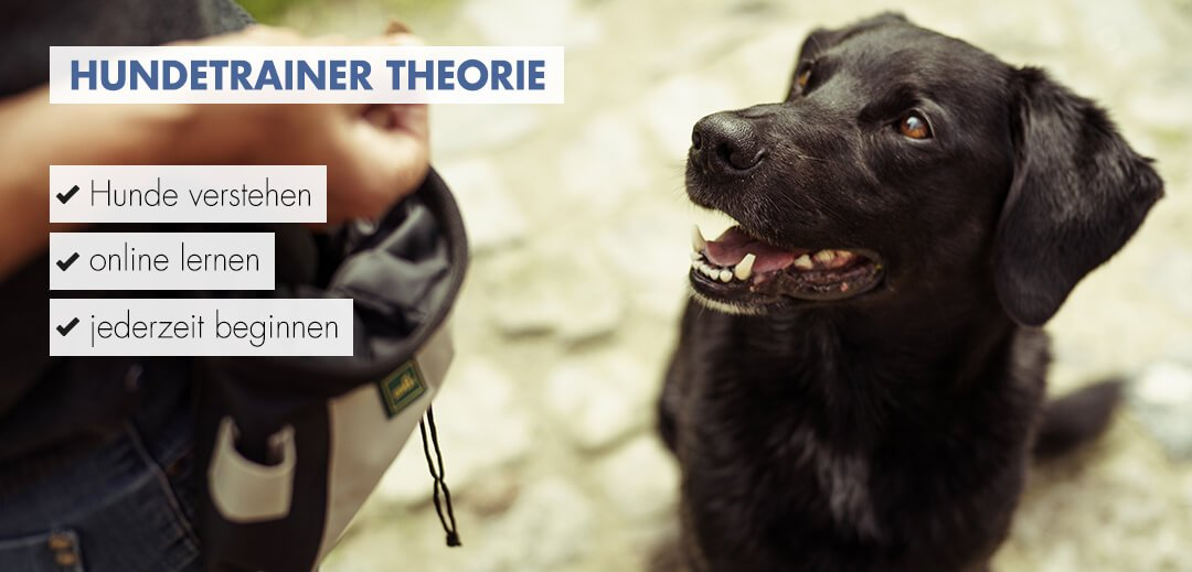 Hundetrainer Theorie Startbild