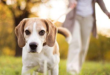 Hundetrainer@home Ausbildung