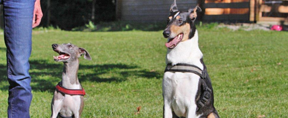 Hundetraining Ziele
