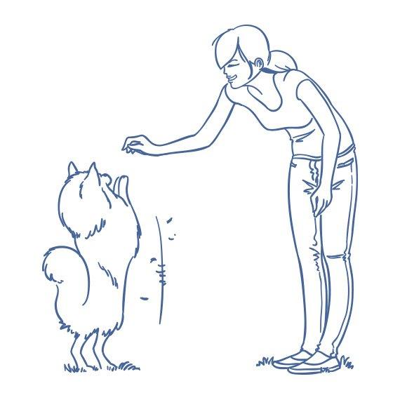 illustration-der-neue-hundefuehrerschein