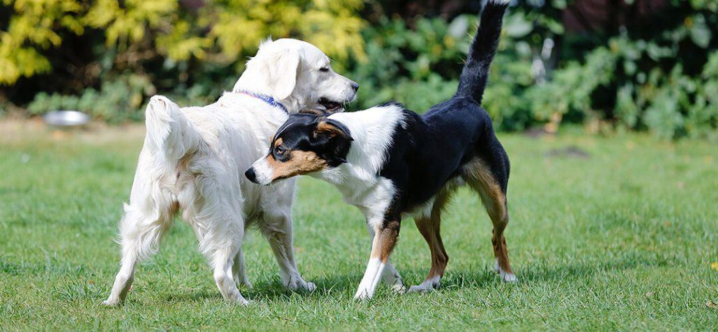 Zwei Hund checken sich auf dem Platz ab