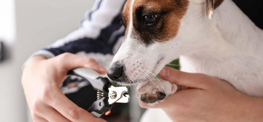 Frai schneidet einem Hund die Krallen