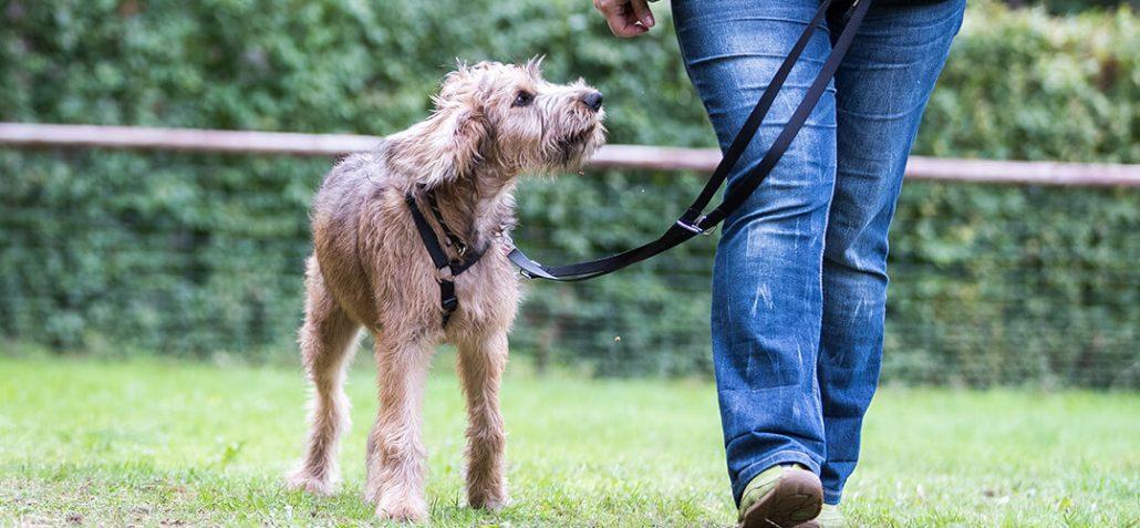 Junger Hund läuft an der Seite seiner Halterin