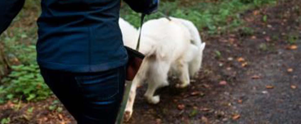 Finn und Lisa beim Schnüffeln