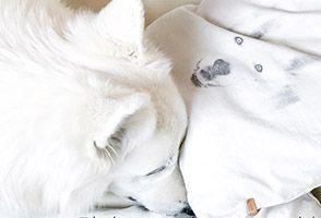 Auslastung und Ruhepausen beim Hund