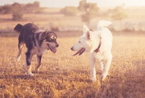 Lisas Blog Hunde auf Wiese im Sonnenuntergang