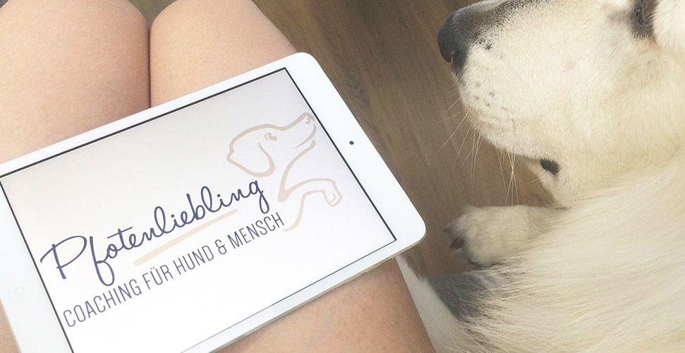 lisas-blog-tagebuch-verhaltensberaterin-eintrag-9-Hundetrainer-selbststaendig