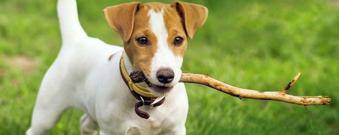 Hund mit Ast im Maul