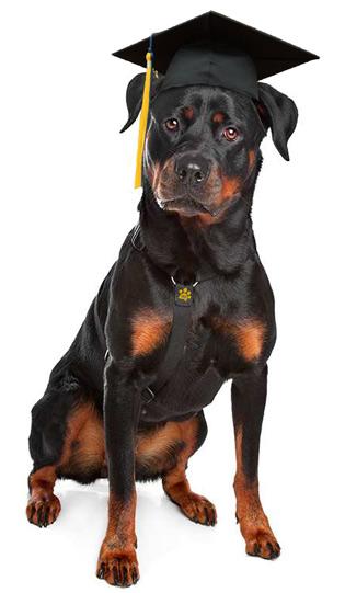 mydog365 - Rottweiler