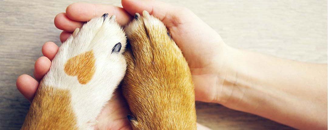 Hundepfoten liegen in den geöffneten Händen einer PErson