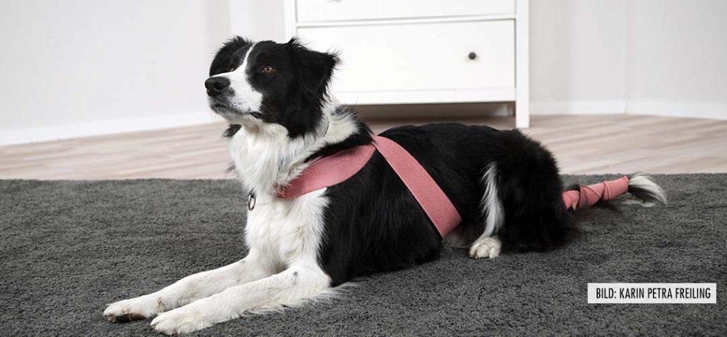N.A.B. - Ganzheitlicher Hundeverhaltenstrainer