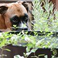 Natürlich unterstützen - ein Workshop zur eigenen Herstellung von Salben und Tinkturen für Hund und Mensch