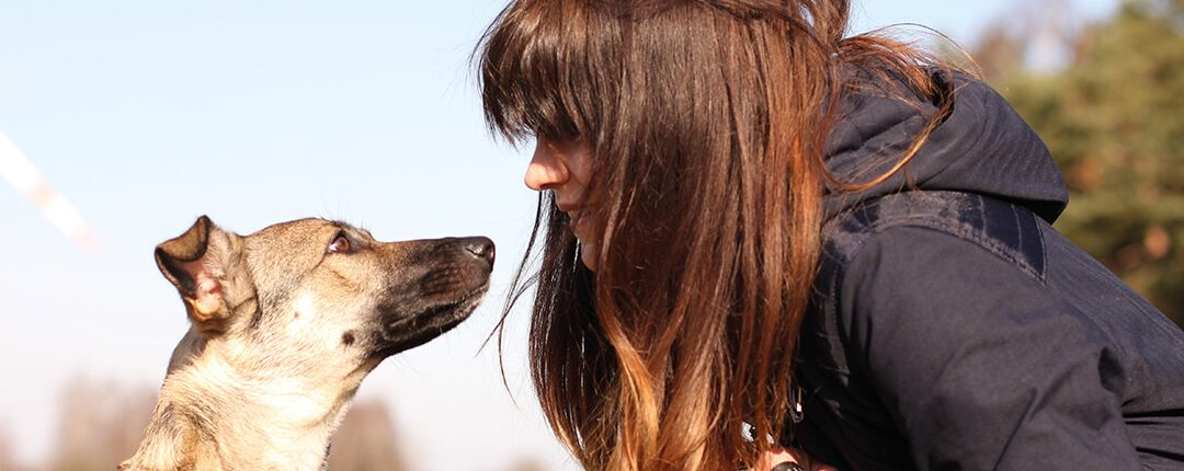 Nonverbale Kommunikation mit Hund