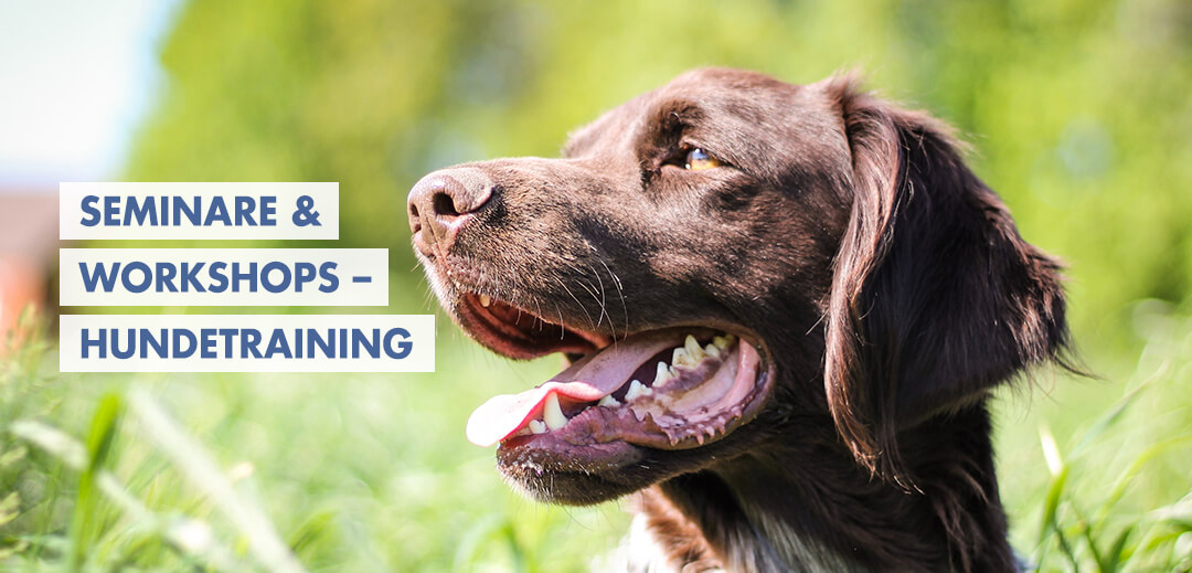 Seminare & Workshop – Hundetraining