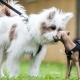 Sozialtraining Hund - 2 Hunde beschnuppern sich auf dem Hundeplatz