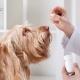 Tierarzt gibt einen Patientenhund Medizin
