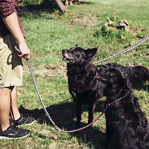 Workshop - schwarze Hunde an der Leine
