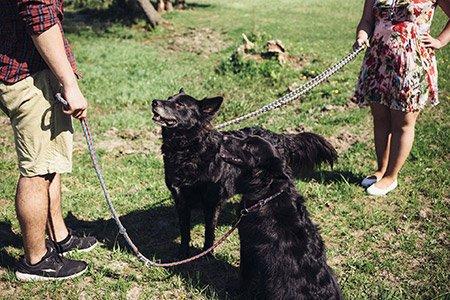 Schwarze Hunde an der Leine - Train the Trainer-Workshop