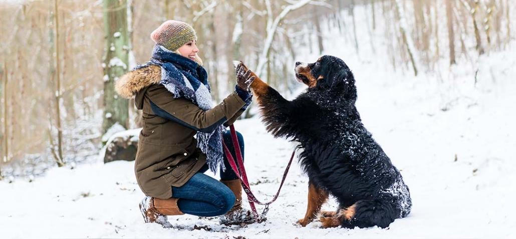 Trick Hund Hundeschule - Hund gibt Frauchen die Pfote