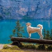 Urlaub mit Hund - Gratisdownload in unserem Shop