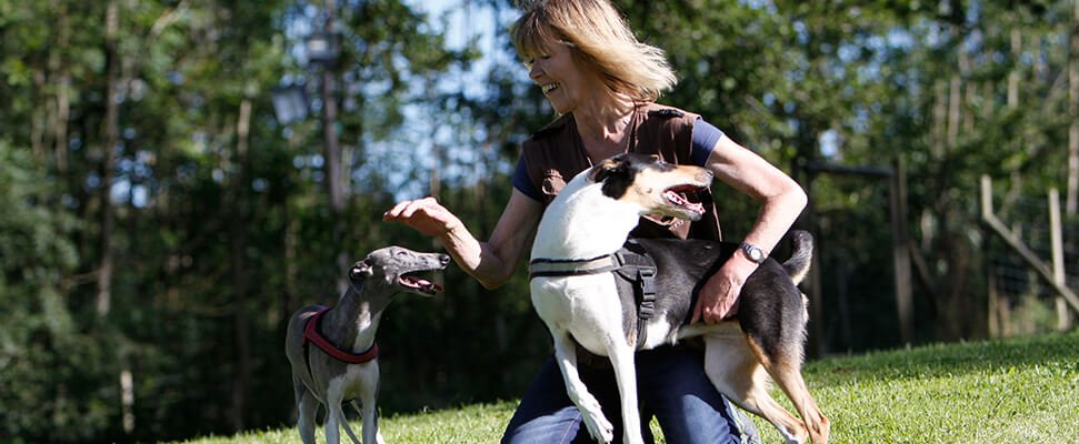 Vorbereitung auf die Hundetrainerprüfung